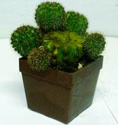 cacti_propagation1.jpg